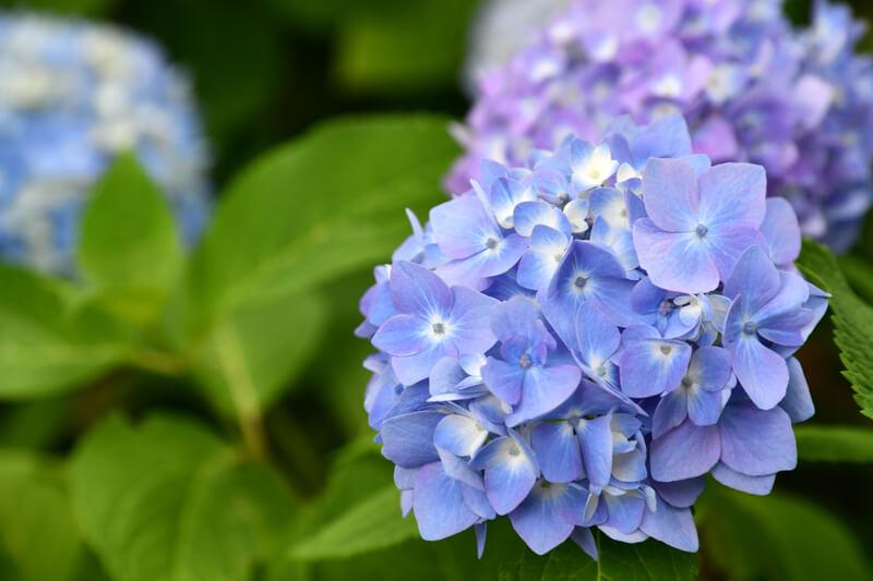 mooie planten voor in de tuin