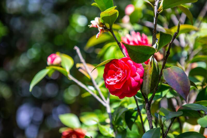 populaire planten voor in de tuin