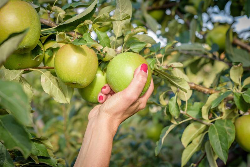 appels kweken in de tuin